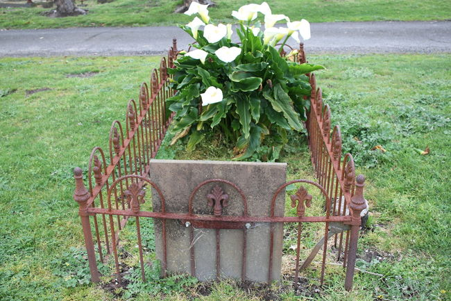 Cementary Characterdesign Lilies Old Weathered Iron Fence Peace And Tranquility Resting Place Restingplace Surrounding Stillness