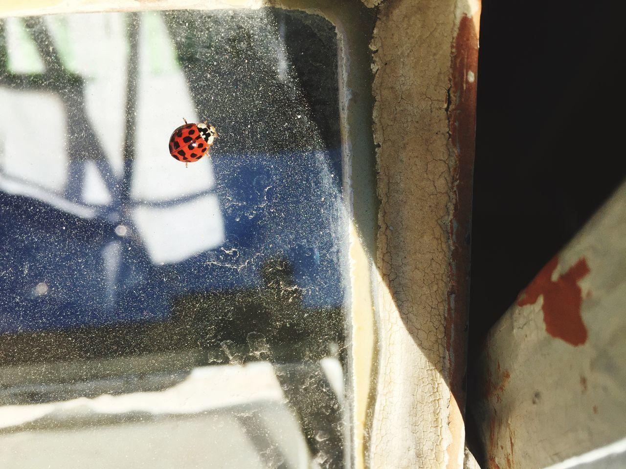 Ladybug Windowsglass Concrete Jungle Glass Windows Hidden Beauty 🐞🐞🐞
