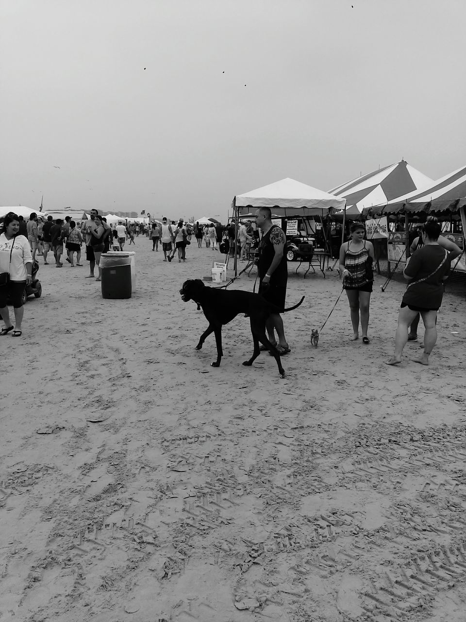 domestic animals, sand, horse, working animal, mammal, beach, large group of people, livestock, one animal, men, real people, nature, outdoors, day, clear sky, sky, pets, people