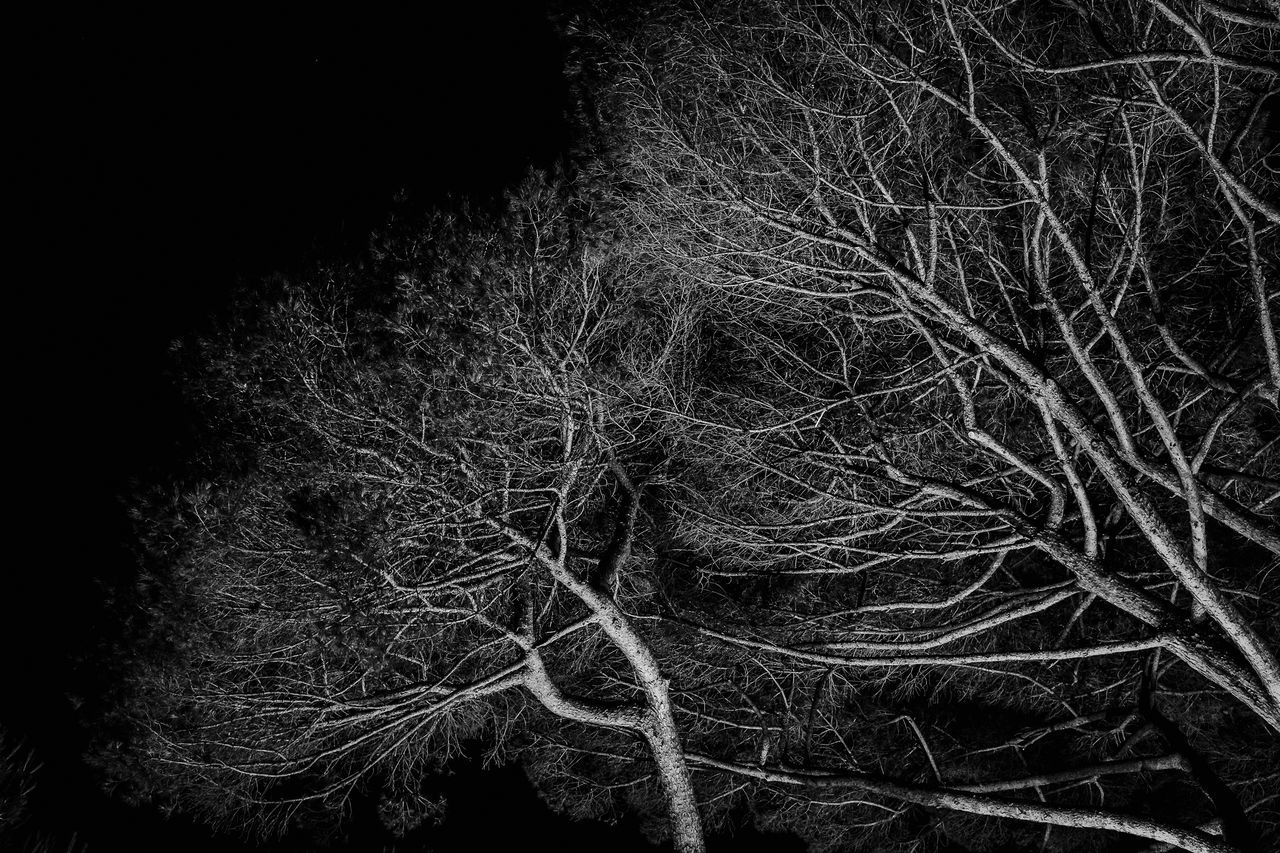 The branches Abstract Backgrounds Black Background Branches Branches And Leaves Close-up Horizontal Monochrome Photography Night No People Trees