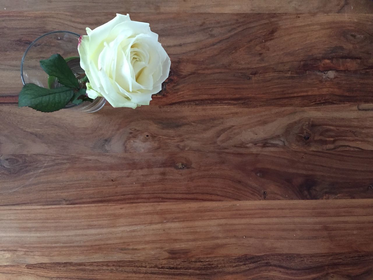 Flower Rose - Flower Table Backgrounds Wood - Material Textured  Close-up Indoors  Material Pattern Glass - Material Empty Plate