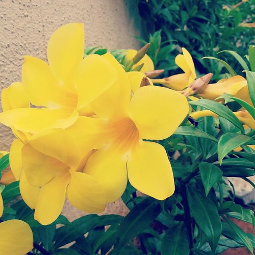 Nature_collection Yellow Flowers Godscreation Frommylens