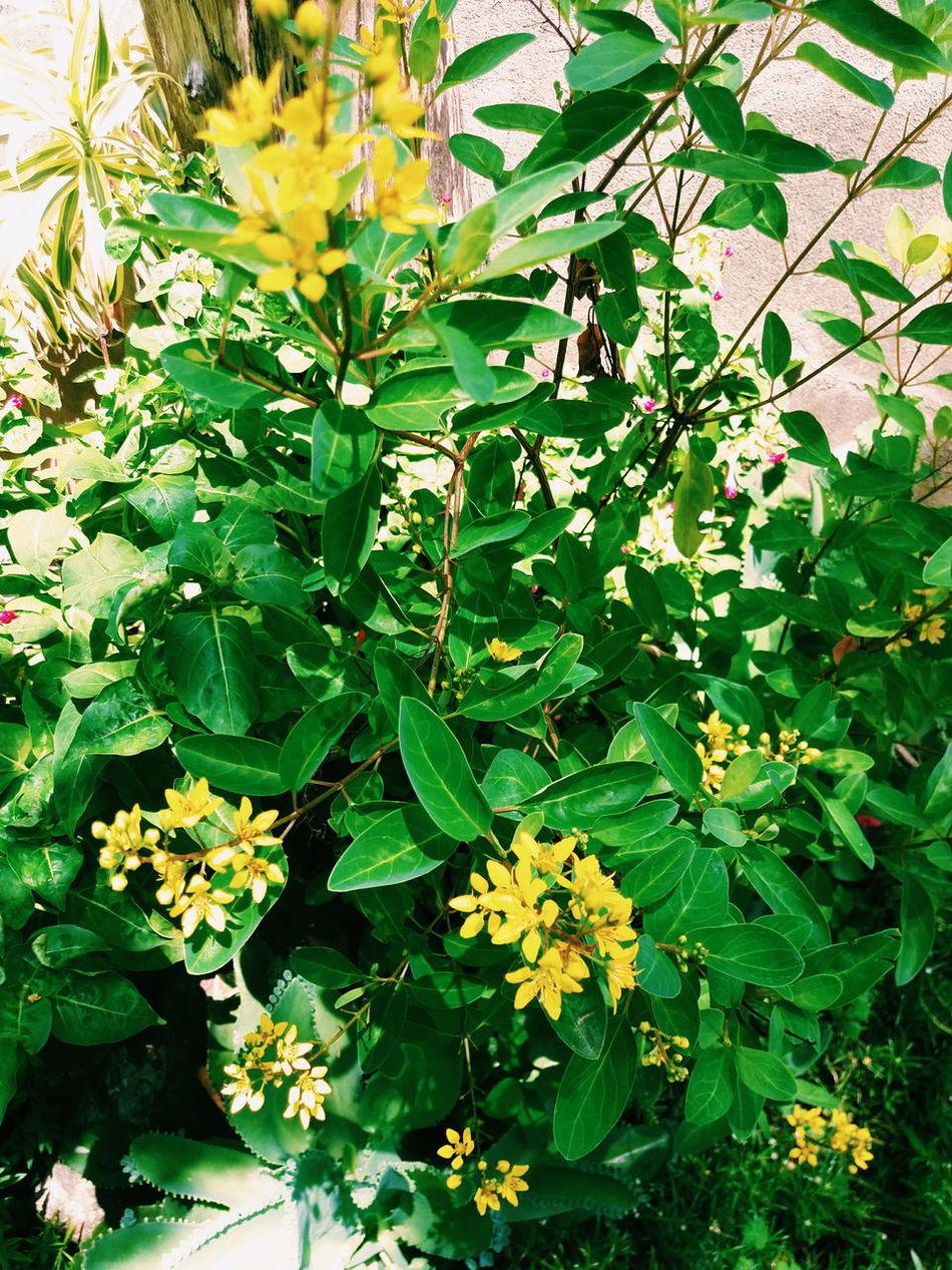 Vsconature Vscogreen Vscoflower