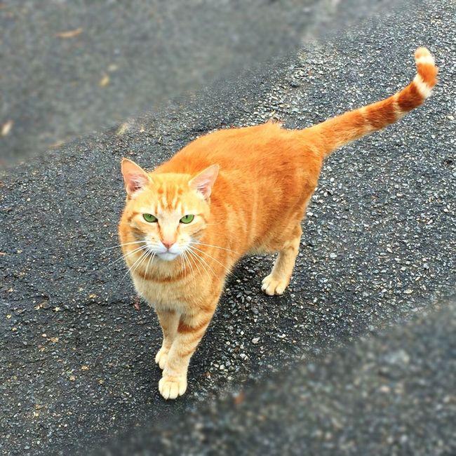 Chat Chat D'EyeEm Chats D'EyeEm Catfie CHATFIE Cat Cats Of EyeEm Chat Cat♡