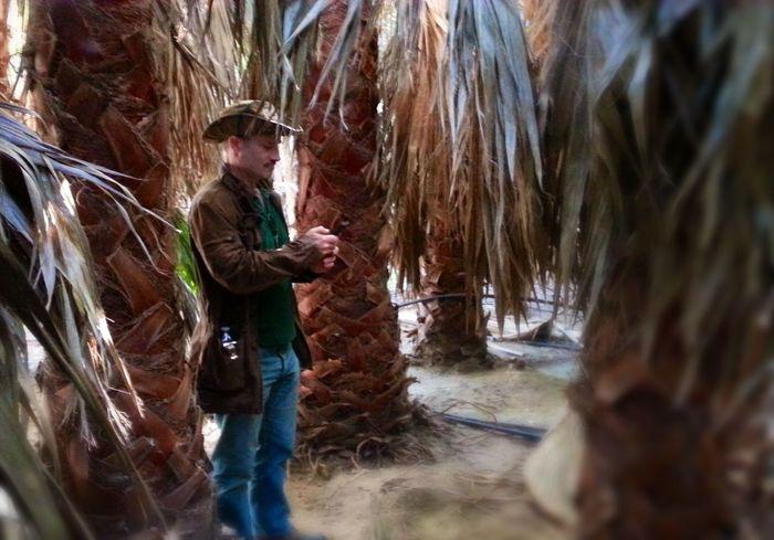 Horticulturist Palms Grove Fallbrook