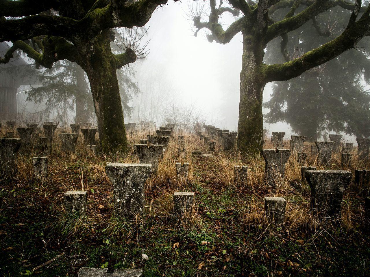Showcase: December üetliberg Forest Foggy Day Fog Foggy Fog_collection Trees Mist Misty Schweiz Zurich, Switzerland Zürich Switzerland Nature Nature_collection