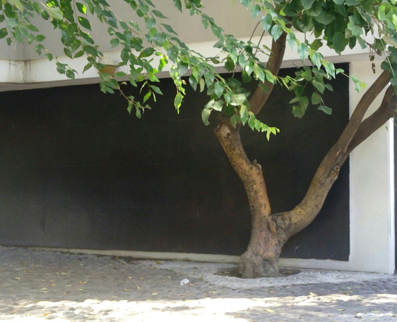 Dando El Rol Calles En Ruinas Esto Es Mexico el árbol vigila la calle...