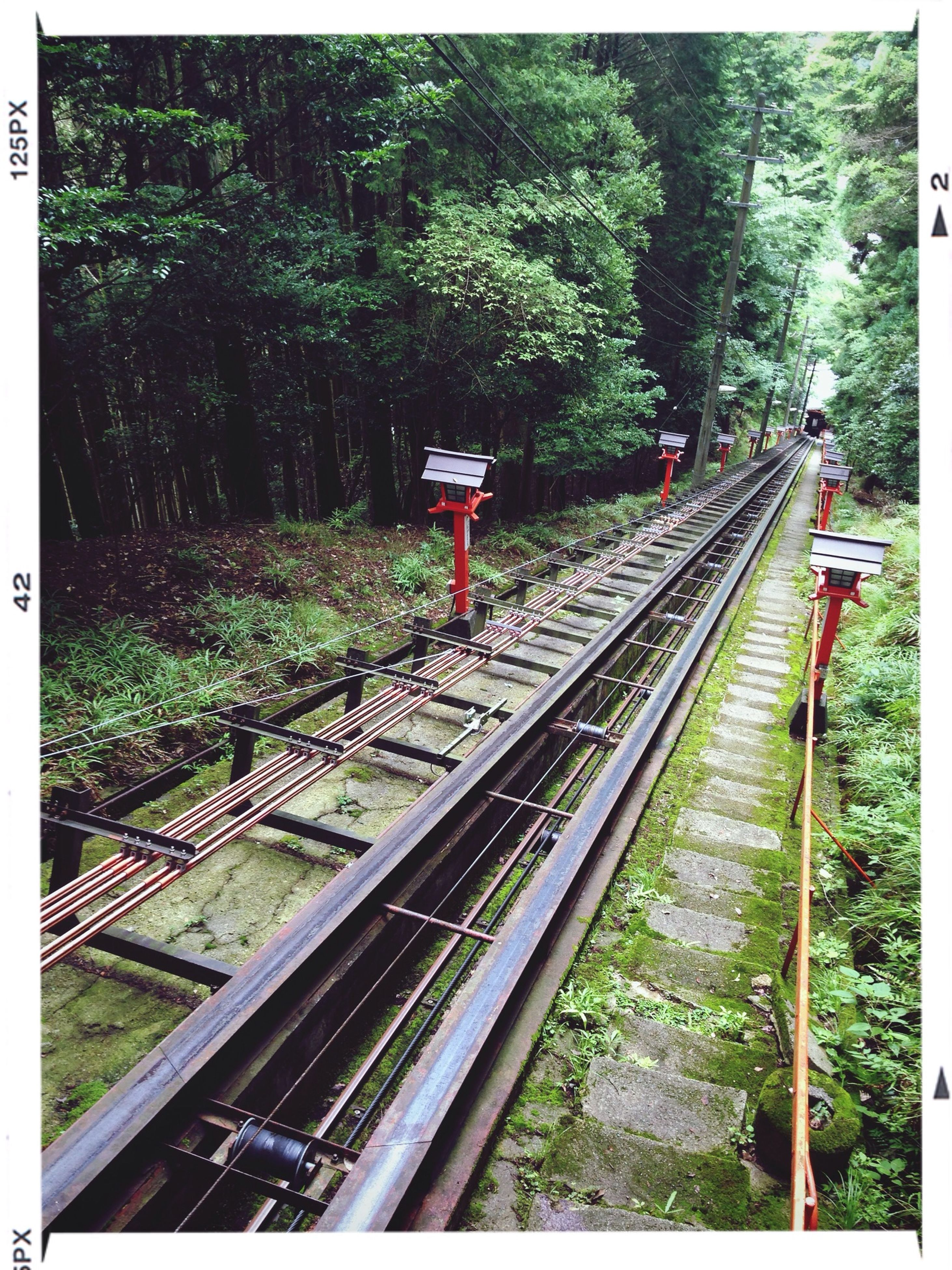 railroad track, transportation, rail transportation, transfer print, public transportation, tree, auto post production filter, railroad station platform, train - vehicle, connection, the way forward, railway track, high angle view, railroad station, diminishing perspective, travel, train, vanishing point, forest, mode of transport