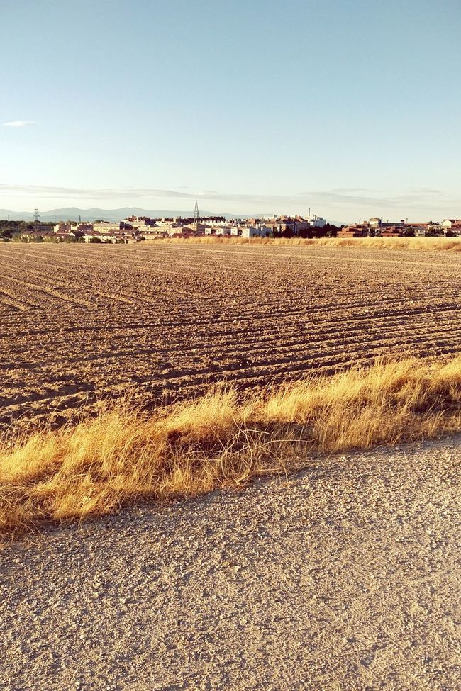Campo Tierra Landscape Rural Scene Agriculture Field Outdoors Nature No People Crop  Tranquility Horizon Over Land Summer Verano Ocaso Sunset First Eyeem Photo