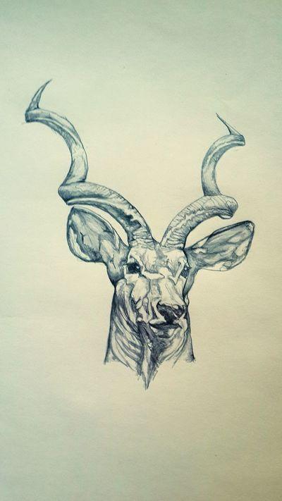 Wildlife Wildlife Drawing Kudu Zambia African Bush Deer In The Headlights Sketch Love Drawing Beautiful Creature