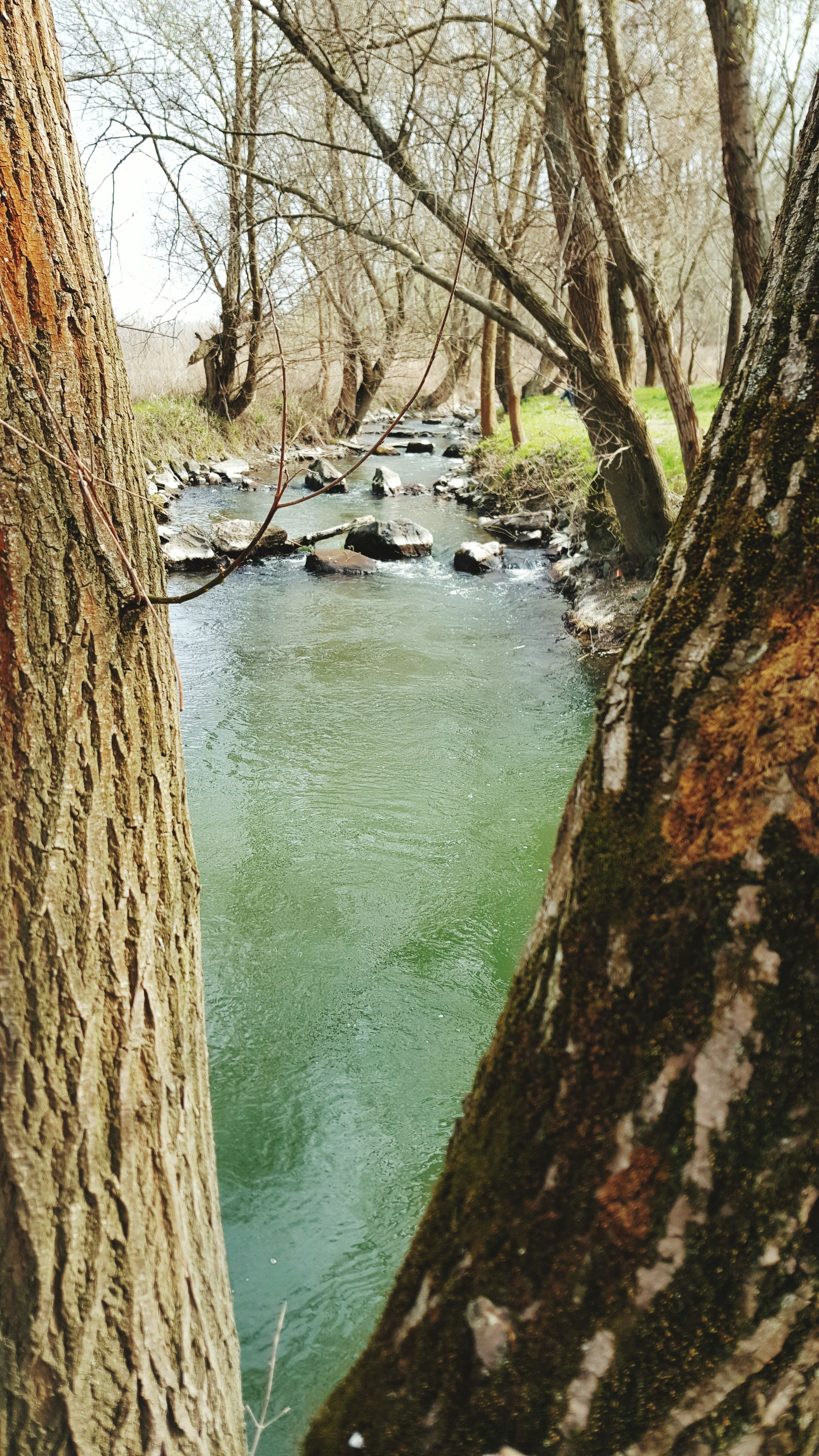 water, tranquility, tranquil scene, scenics, nature, beauty in nature, tree, river, rock - object, tree trunk, rock formation, sky, branch, lake, reflection, idyllic, bare tree, day, outdoors, no people