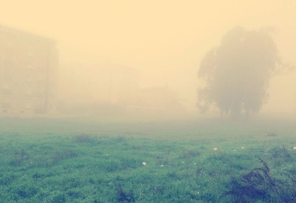 Sicksadworld Foggy Morning Gloomy