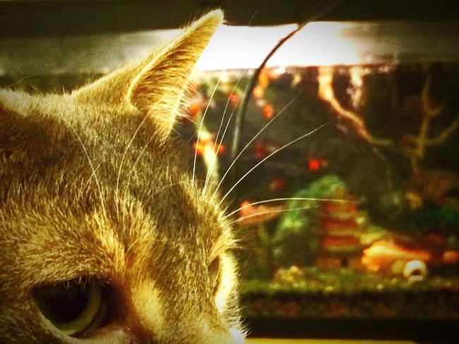 Not guilty. Abyssinian  Itwasntme