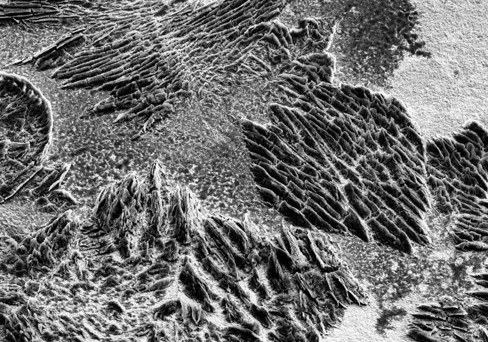 Art And Craft Close-up Lithoart Lithography Microstructure REM