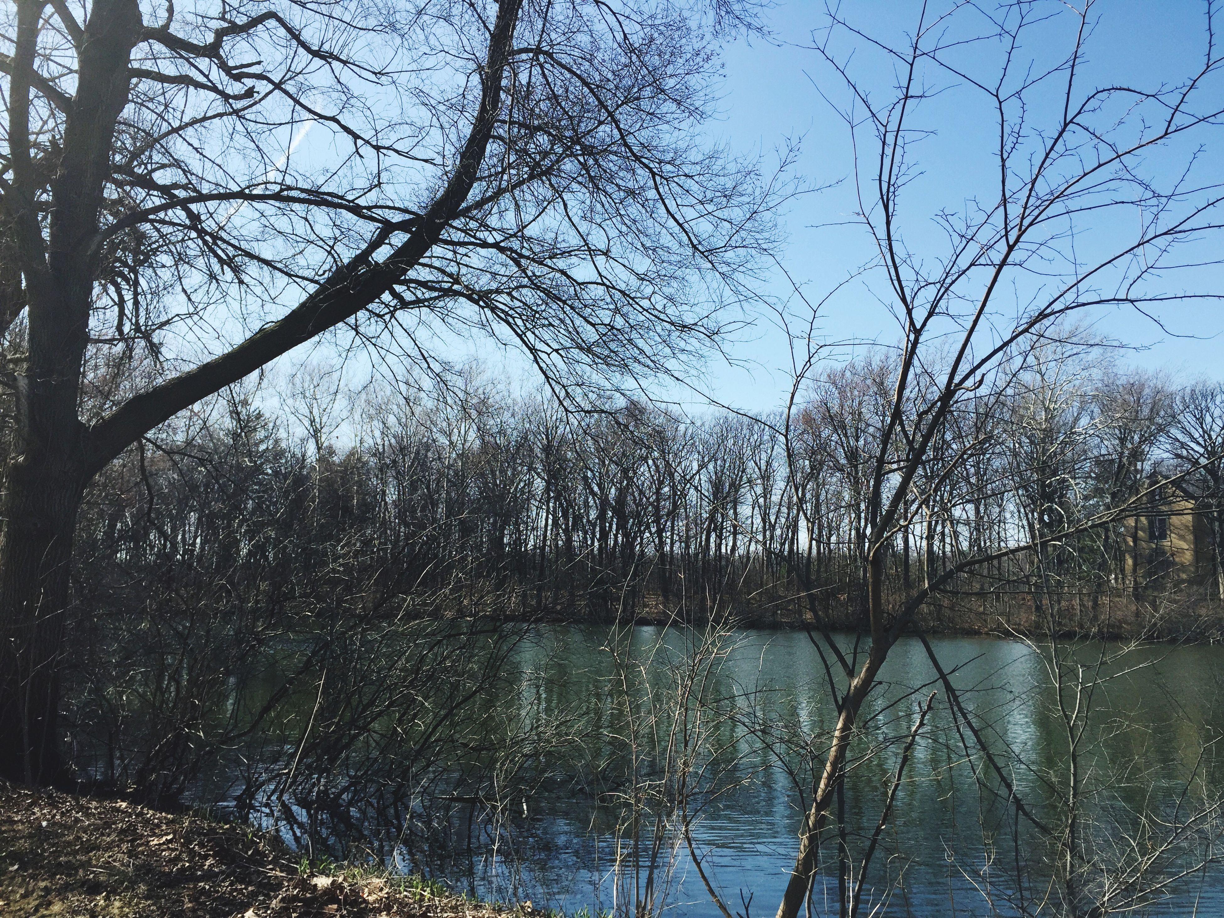 water, tree, reflection, lake, tranquility, bare tree, sky, nature, tranquil scene, branch, scenics, beauty in nature, clear sky, growth, river, day, waterfront, no people, outdoors, blue