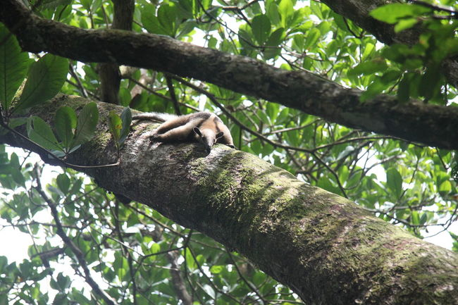 Parque Nacional Cahuita Alberi Costa Rica Crotalo Mar Mare Oceano Scimmie Tartarughe Vegetazione