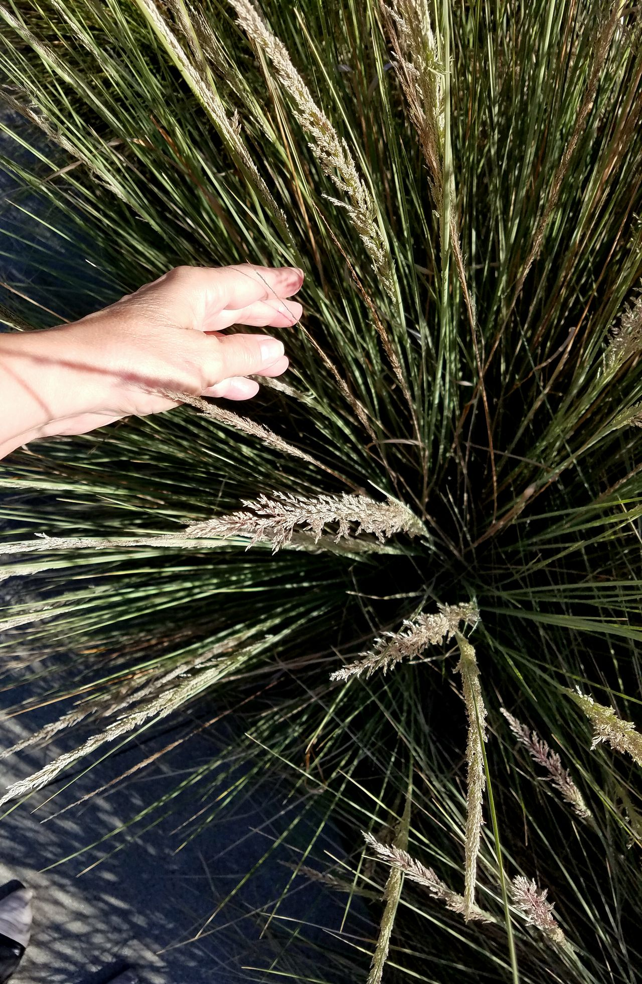 Reaching Growth Part Of Person Cropped Green Color Plant Nature Outdoors Branch Palm Leaf Beauty In Nature Scenics Hand Natural Condition Check This Out Fine Art Photography Tall Grasses Fragility Tranquility Dramatic Angles