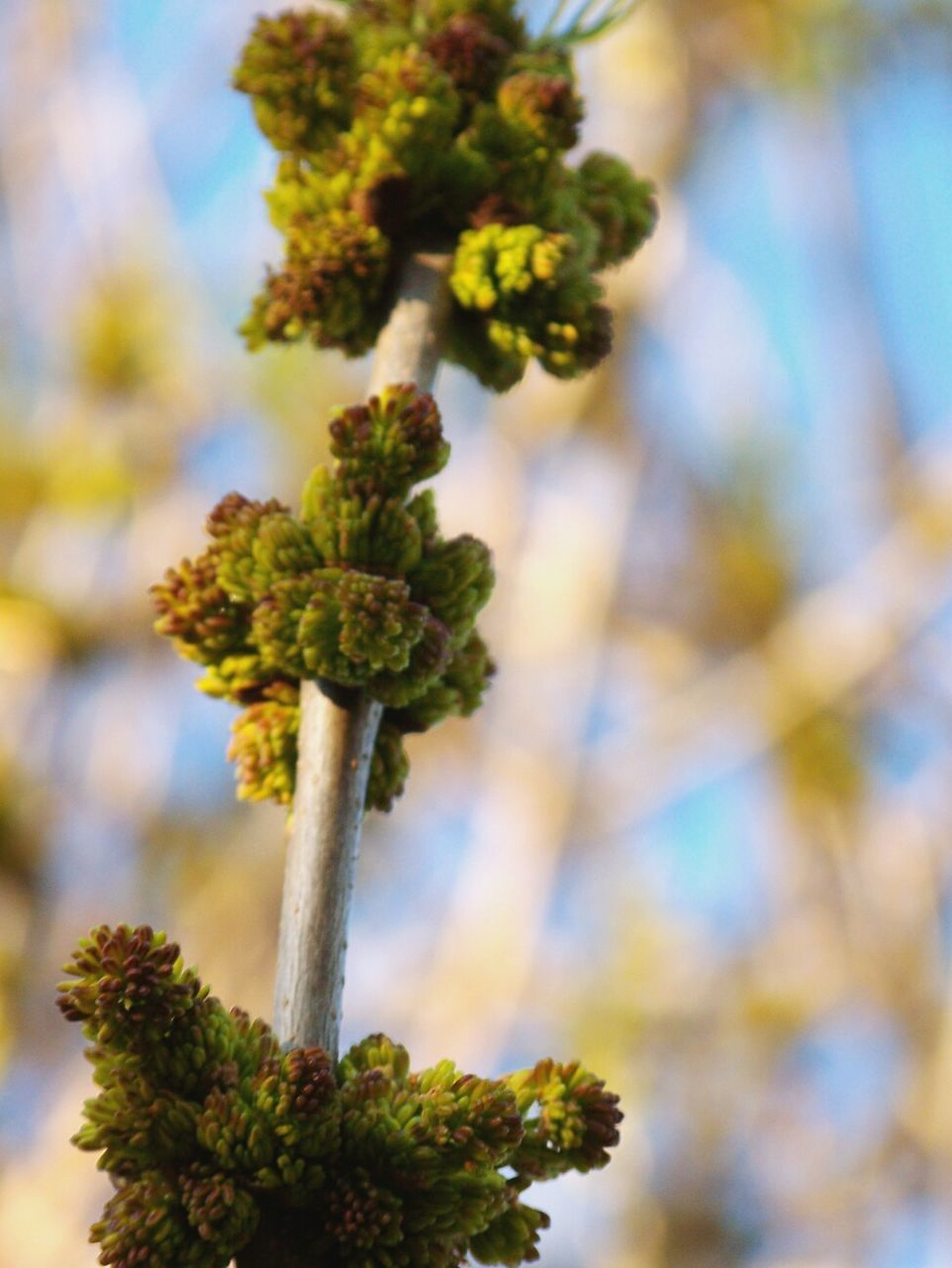 growth, no people, nature, focus on foreground, green color, plant, day, marijuana - herbal cannabis, close-up, outdoors, beauty in nature, tree, sky