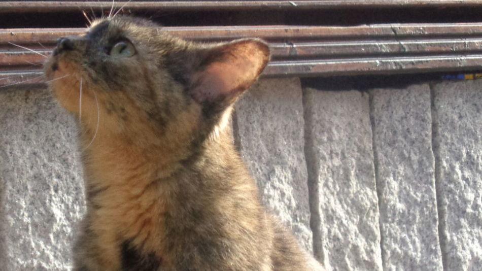 Cat Bibi One Animal My Lovely Cat Domestic Cat Kedi Look Gato😽 Pet Portraits