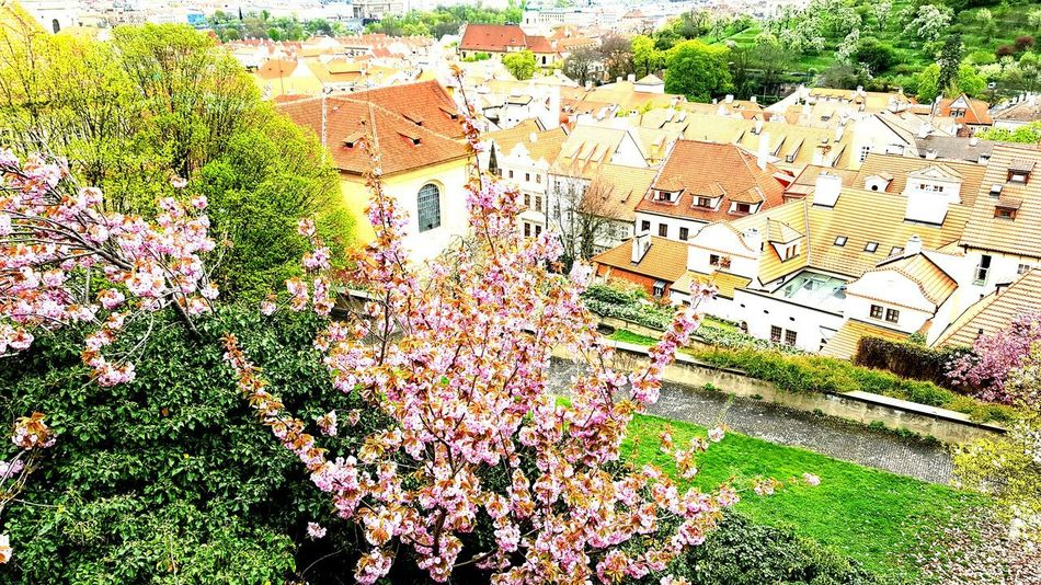 Outdoors High Angle View No People Built Structure Architecture Building Exterior Flower Tree Lametayel Instamood Hot_shotz Insatagram View From Above Buildings Cloud - Sky Samsungphotography Old Town Square (Staroměstské Náměstí) Prague Instadaily Instagood Cityscape Moments Of Life Day Instahub City