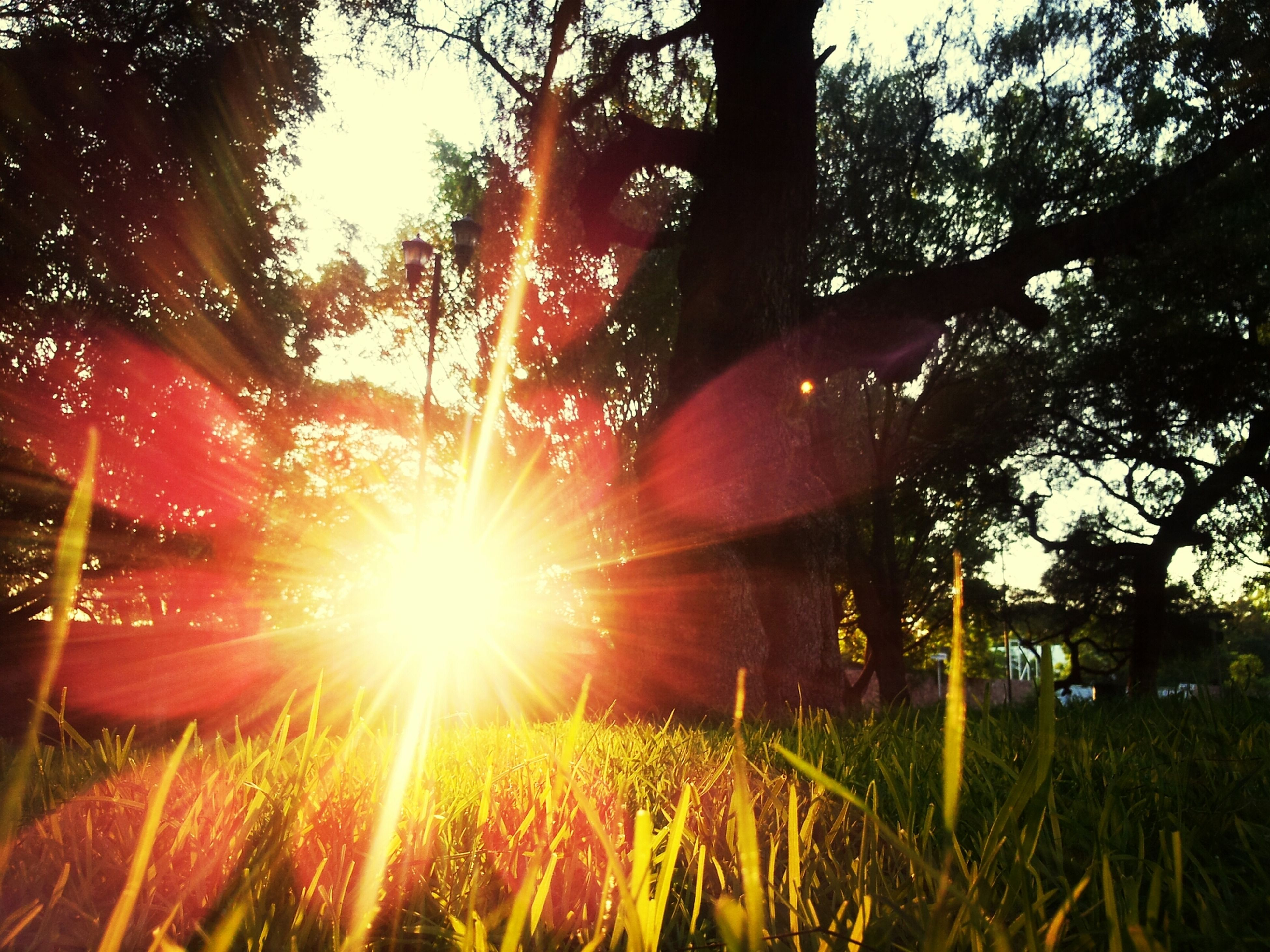sun, sunbeam, lens flare, sunlight, growth, tree, grass, nature, field, tranquility, beauty in nature, bright, sunset, back lit, plant, sunny, tranquil scene, outdoors, sky, clear sky