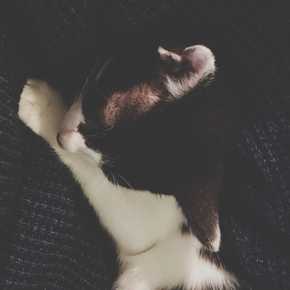 だっこ 寝💤 雨ちゃん