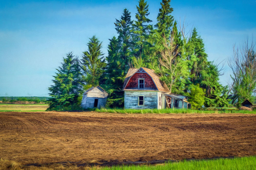 Farm Life Homestead Abandoned Agriculture Architecture Blue Building Exterior Built Structure Close-up Day Farm Farmhouse Field Grass House Landscape Nature No People Outdoors Rural Scene Scenics Sky Tree