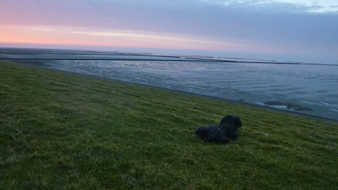 Sea Horizon Over Water Nature Sunset Grass Beauty In Nature Water Sky Scenics No People Domestic Animals Beach Outdoors Cloud - Sky Mammal Day EyeEm Nature Lover Seascape Photography Waddenzee Beauty In Nature Groningen Holland My Best Friend❤ Happiness Dogs Of EyeEm Dog Photography