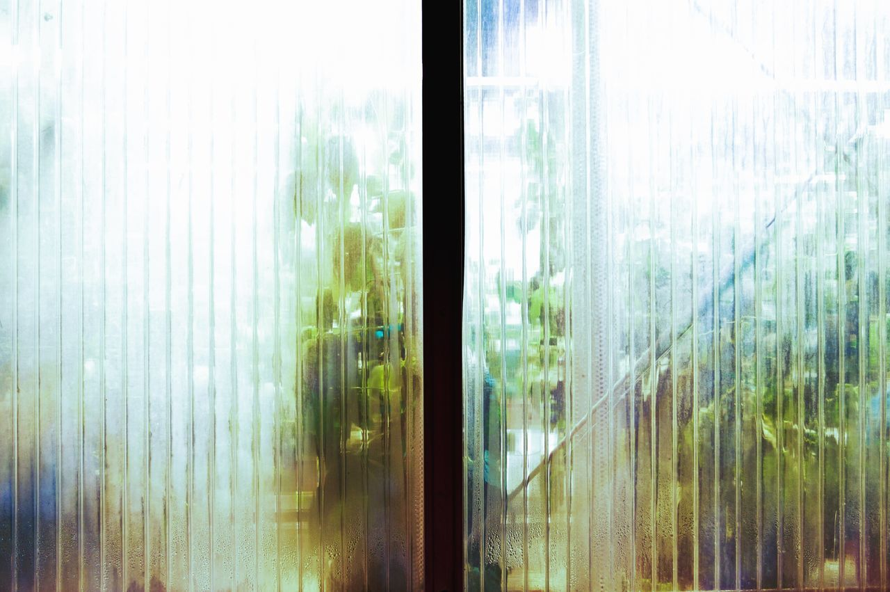Window Curtain Indoors  Day No People Tree Close-up Sliding Door Ajar The Week Of Eyeem Plants And Flowers Biology Plant Life The Week On EyeEm