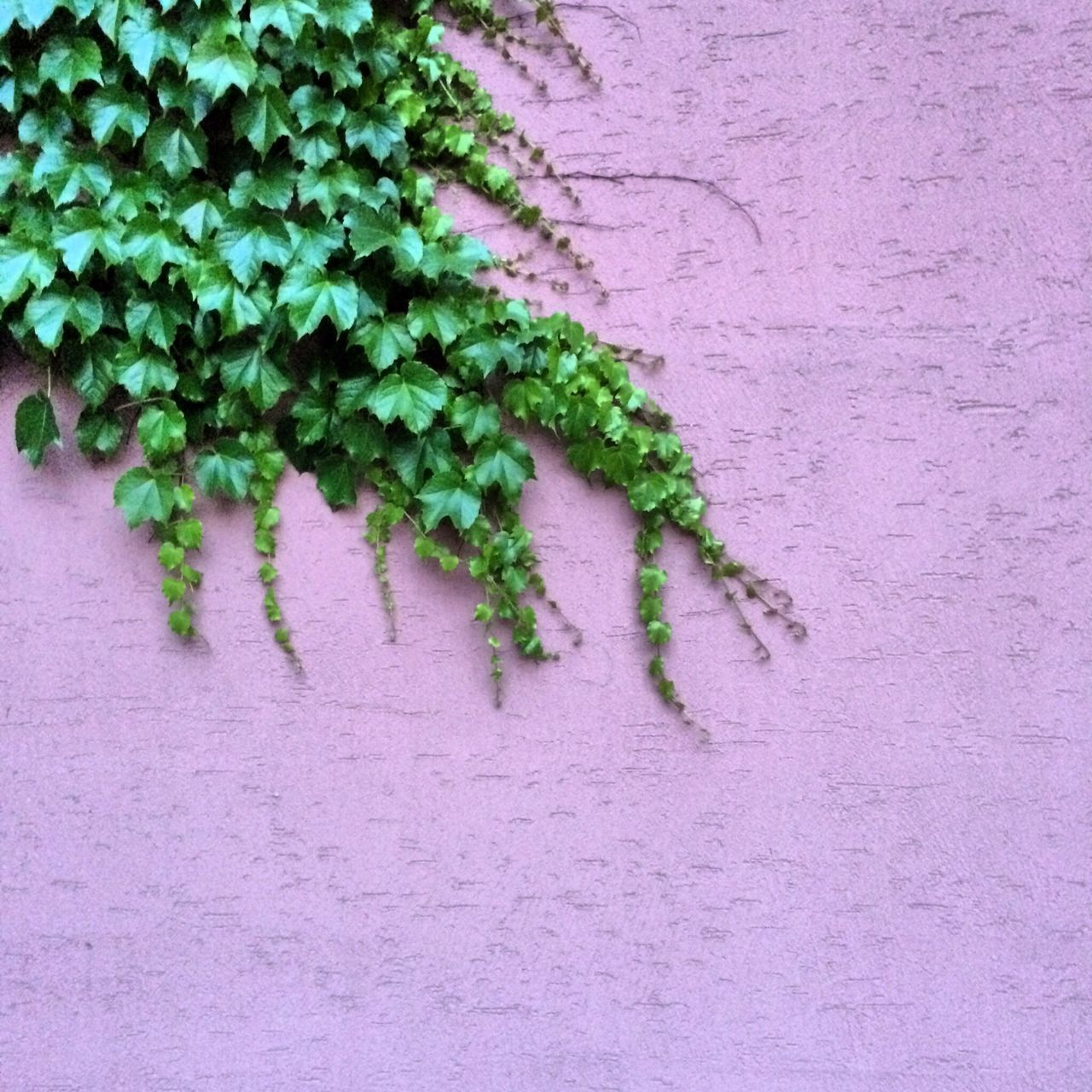 Beautiful stock photos of wall, Copy Space, Day, Fragility, Green Color