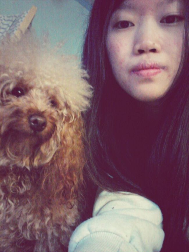 Cute cute Dog HongKong Girl Chok Poodle