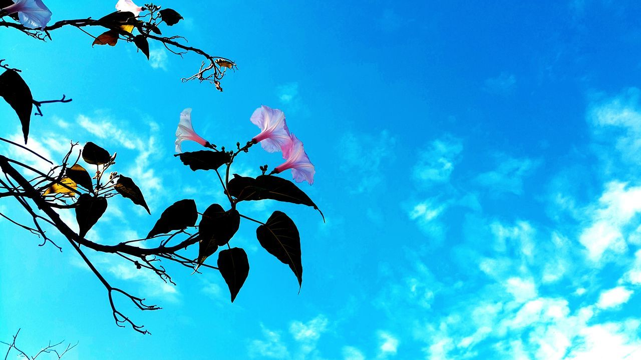low angle view, sky, beauty in nature, growth, nature, day, no people, cloud - sky, branch, outdoors, blue, flower, leaf, tree, fragility, freshness, close-up