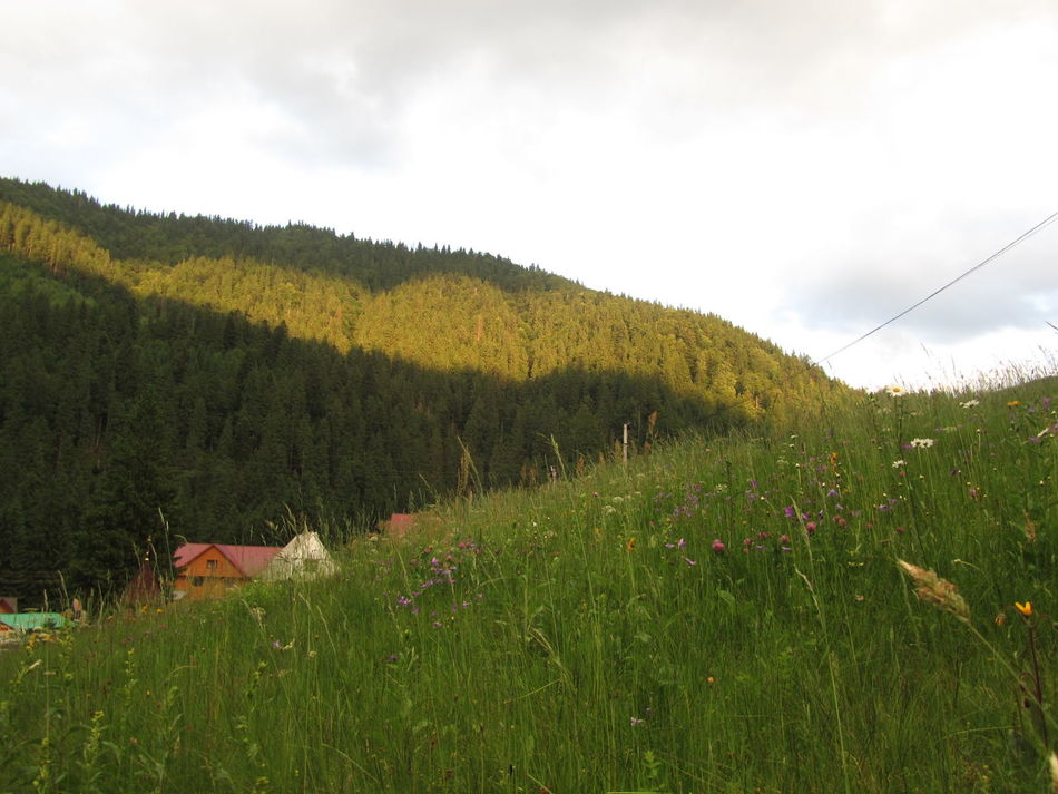 Nature Landscape Grass Beauty In Nature Day Mountains Carpaty Summer Sunny Sun Sunlight Beauty Finding New Frontiers