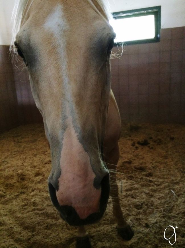Job Horse Vet Life Vet Student Veterinarian