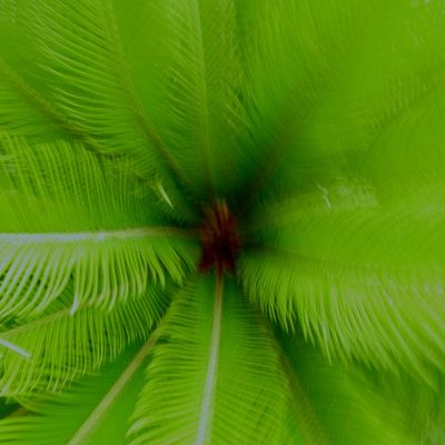 green blur Blur Green Colors EyeEm EyeEm Nature Lover OpenEdit Taking Photos Leica D-lux Typ109