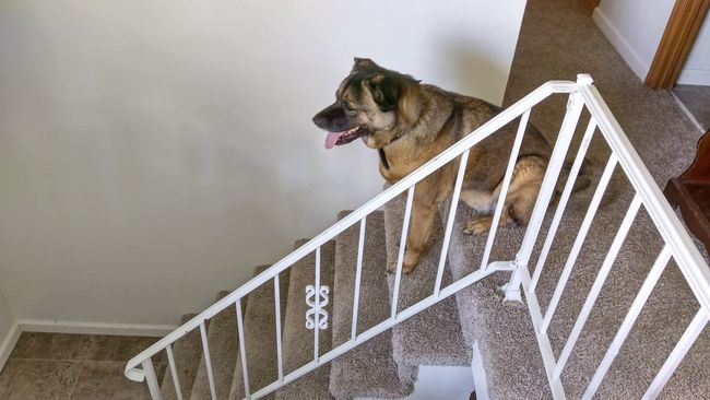 The Purist Guard Duty The K9GB Break Time My Dogs Are Cooler Than Your Kids Who's Afraid Of The Big, Bad Wolf? People Under The Stairs