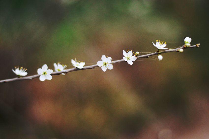 🌸 Spring Flowers Italy Italia Nikon Nikonphotography Nikonphotographer Photo Photography Nature Springtime Flower Perugia Growth