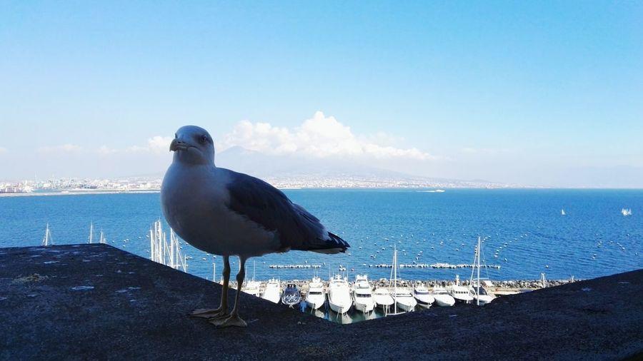 Sea Bird Animal Wildlife Horizon Over Water Blue Animal Themes Sky Nature No People Animals In The Wild Seagull Johnathanseagul Napoli ❤ Italy🇮🇹