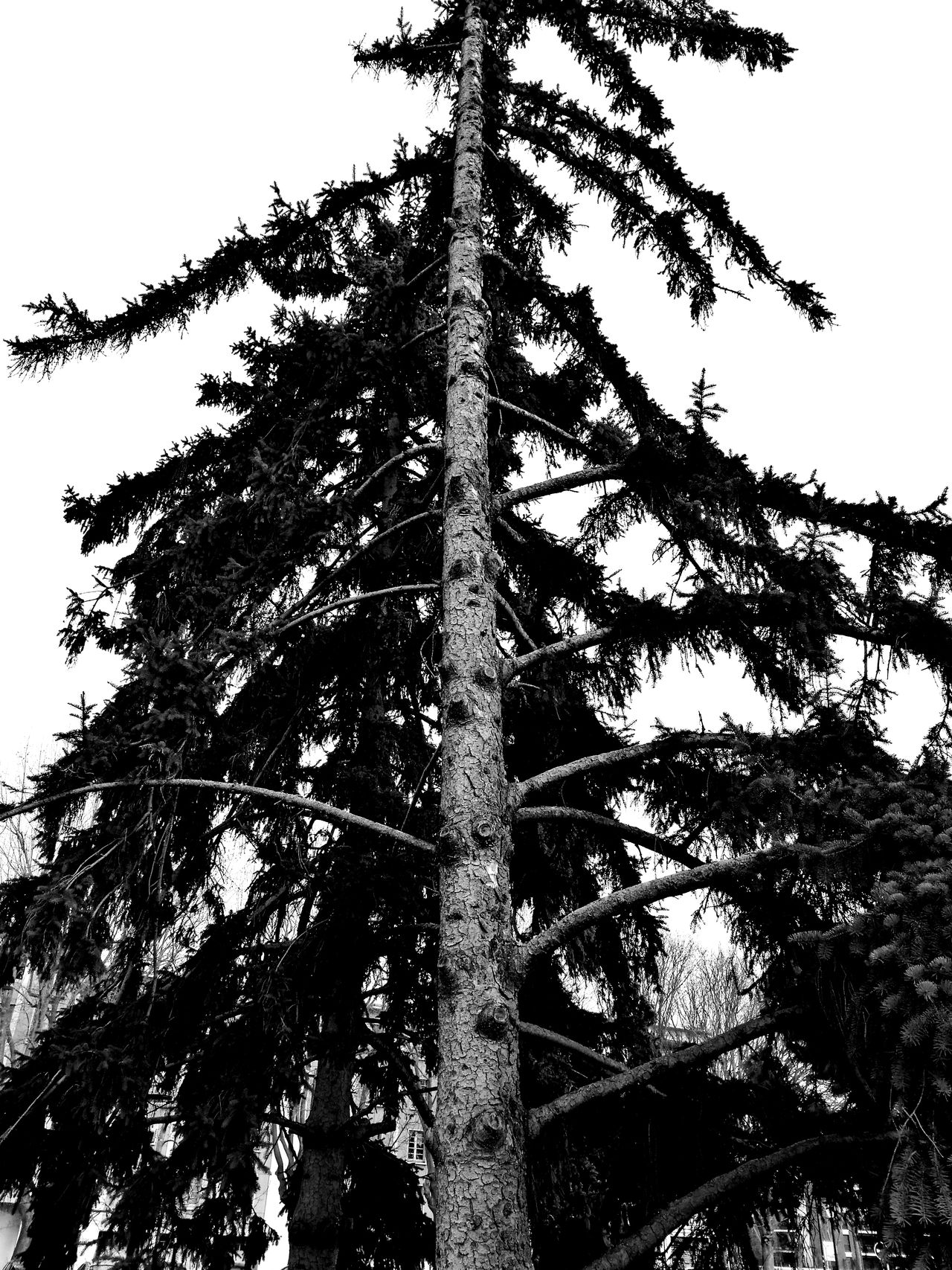 Tree Nature Sky No People Beauty In Nature Outdoors Black And White Light And Shadow Trees City