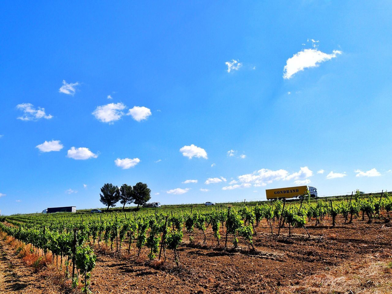 Agriculture Field Growth Farm Landscape Vineyard Rural Scene Crop  Sky Winemaking Nature Tranquility No People Scenics Cloud - Sky Day Beauty In Nature Outdoors Tree Trucks