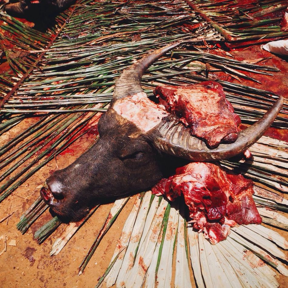 Beautiful stock photos of death, Animal Head, Animal Themes, Branch, Buffalo
