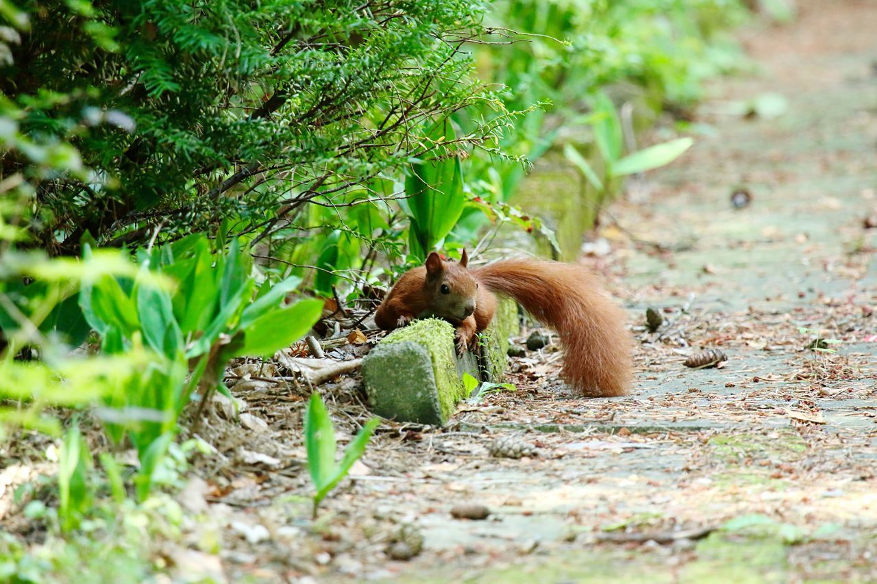 Beautiful stock photos of squirrel, Animal Themes, Animals In The Wild, Day, Forest