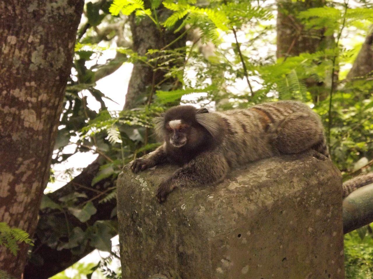 Animal On Tree Trunk