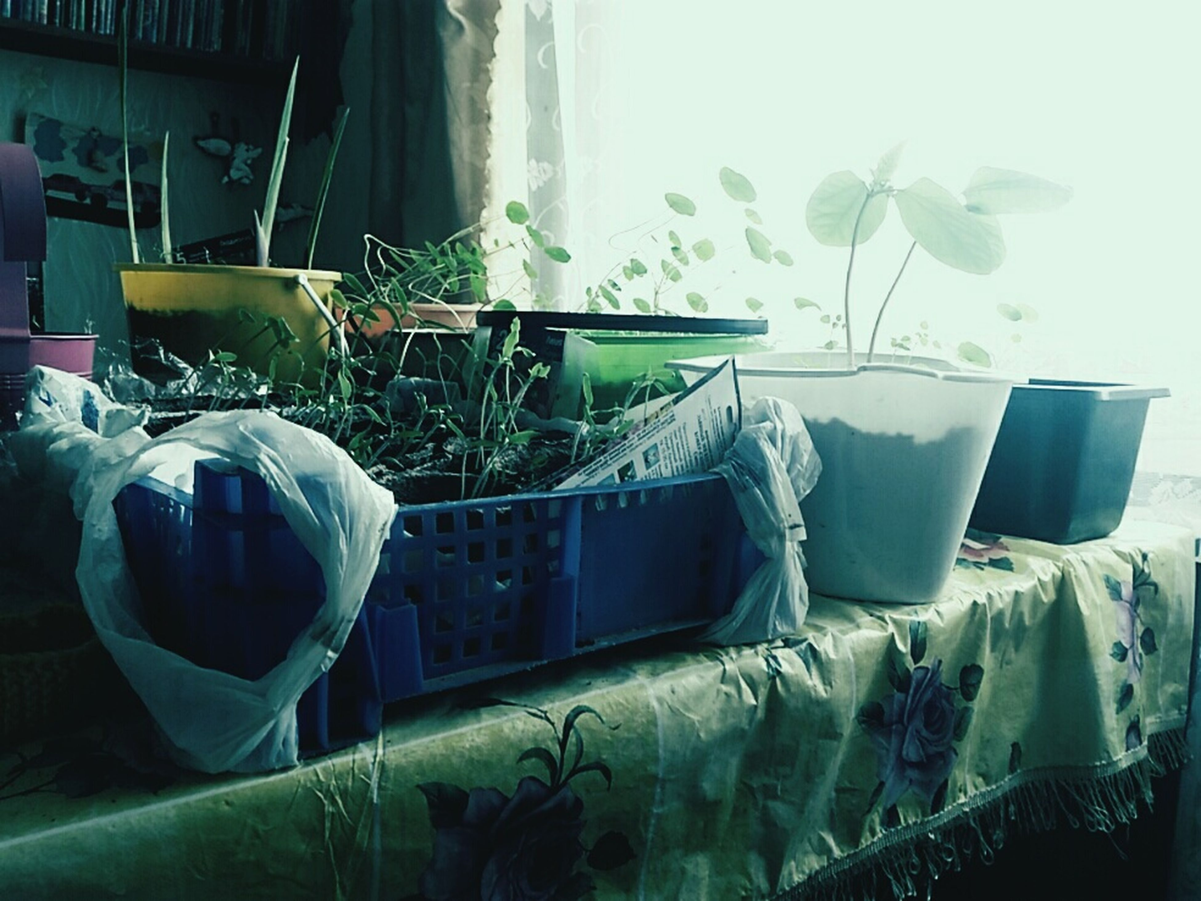 indoors, plant, no people, home interior, leaf, day, bedroom, nature, close-up