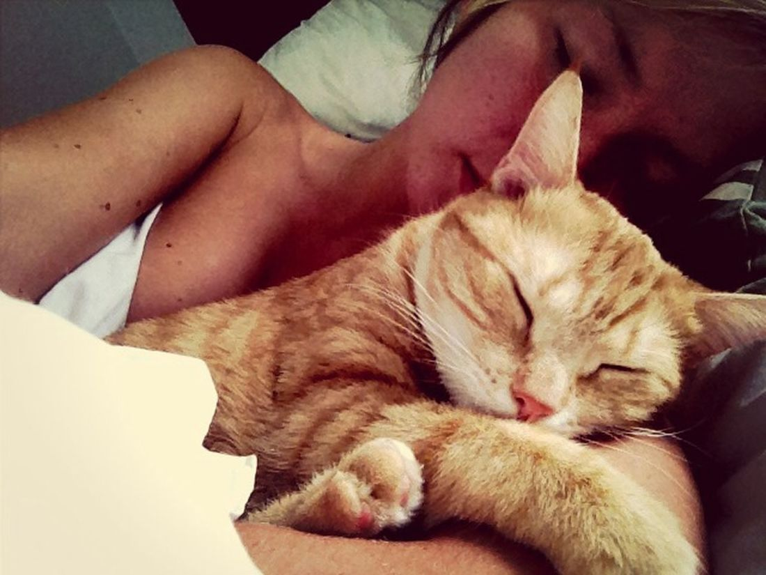 Enjoying Life with Tigerlou in my big bed at Home . Cats