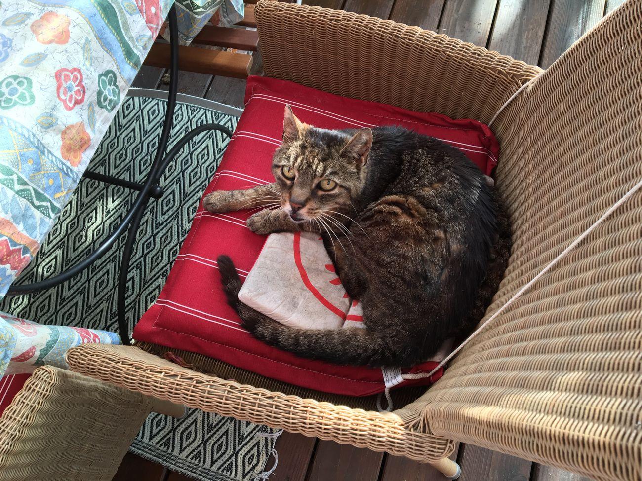 Freddie Freddie The Cat My Cat