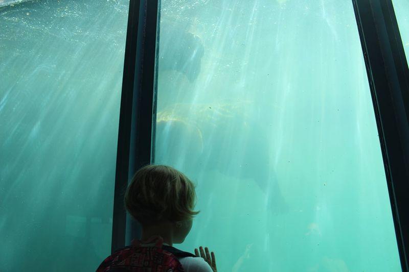 The Photojournalist - 2016 EyeEm Awards Kid Zoo Aquarium Bear Swiming Underwater Child Blue Water Boy Girl Young Cute The Following Sun Flare Sunlight People Of The Oceans Ocean Sea Girl Power Original Experiences Feel The Journey The Photojournalist - 2017 EyeEm Awards