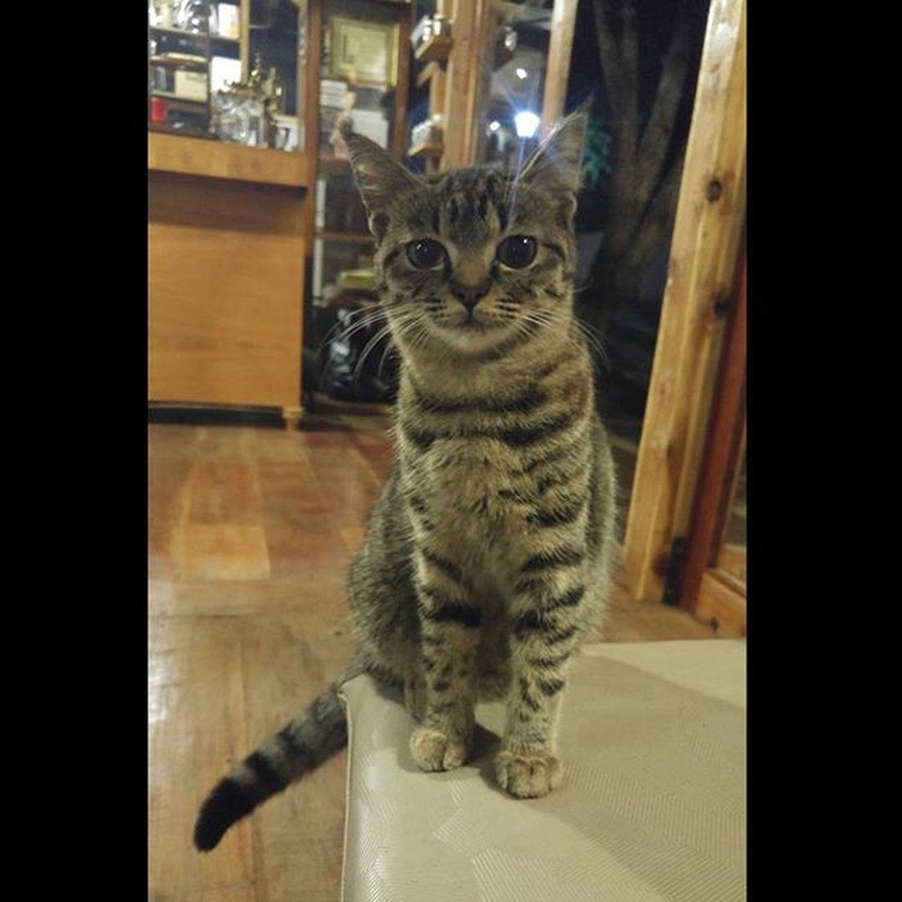 Animal Animallovers Cat Val  2016 LG  G4 LGG4 😚
