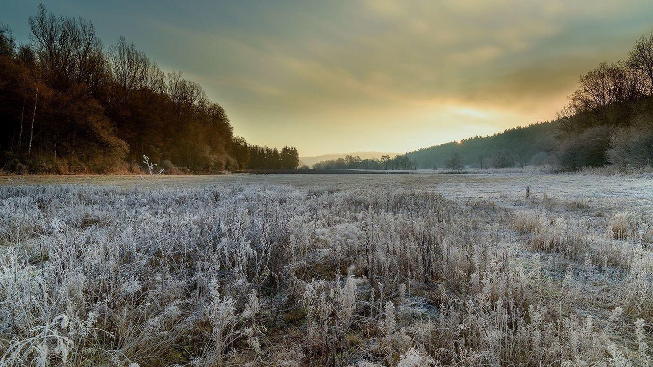 Nature Landscape Winter Wintertime Frosty Tree Forest Altdorf Bei Nürnberg Natur Landschaften Reif Raureif  Wald Bäume
