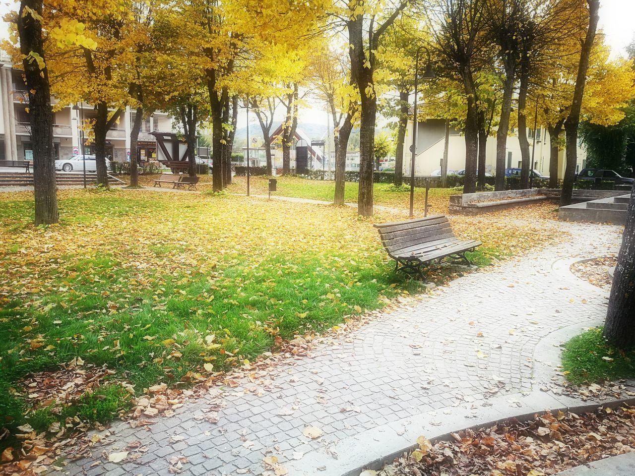 Colori D'autunno ......